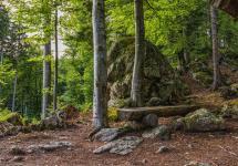 bavarian-forest-2519363