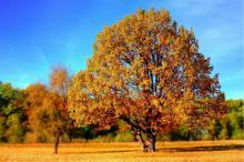 tree-998521920