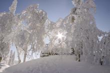 bavarian-forest-4702170